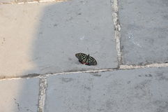 Butterfly on the Great Wall of CHina. A beautiful butterfly sits in the shade on the Great Wall of China Stock Photos