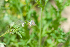 Butterfly on the gree grass.  Royalty Free Stock Images