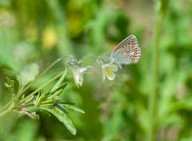 Butterfly on the gree grass.  Stock Photos