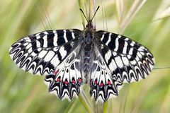 Butterfly in Greece royalty free stock photos