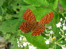 Butterfly in green background Royalty Free Stock Photos