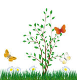 Butterfly on a green bush Royalty Free Stock Photos