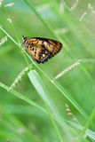 Butterfly. In a green field Royalty Free Stock Photos