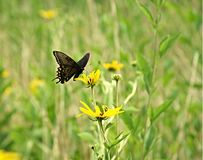 Butterfly in a green field Royalty Free Stock Photos