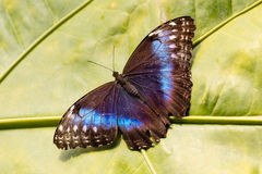 Butterfly in the green forest Royalty Free Stock Images