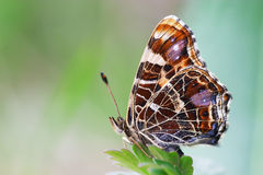 Butterfly on green grass background Stock Photos