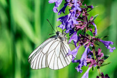 Butterfly. The butterfly on the green grass Stock Photography