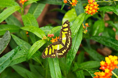 Butterfly. Green butterfly in a grass and flowers Royalty Free Stock Image