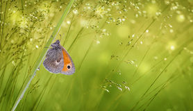 Butterfly on green grass panoramic view Stock Image