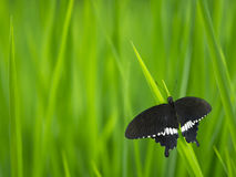 Butterfly and green grass Stock Photos
