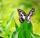 Butterfly on a green leaf Stock Photo