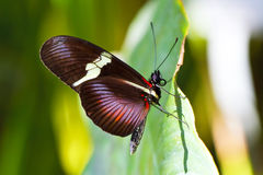 Colorful butterfly on green leaf stock images