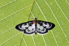 Butterfly on the green leaf Stock Image