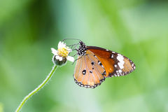 The Butterfly on green leaf Stock Photo