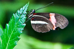 Butterfly. On a green leaf Royalty Free Stock Image