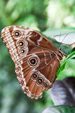 Butterfly. On a green leaf Stock Photos
