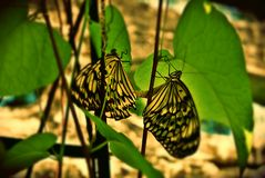 Butterfly. On green leaf Stock Images