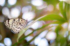 Butterfly on green leaf Stock Photos