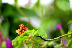Butterfly on green leaf in aviary Royalty Free Stock Photo