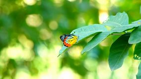Butterfly on green leaf nature background stock footage