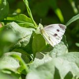 Butterfly on a green leaf in nature royalty free stock photography