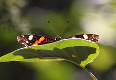 Butterfly on a green leaf Stock Photos