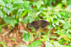Butterfly on green leaf Stock Images