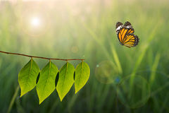 Butterfly and green leaf on sunlight in nature Stock Photography