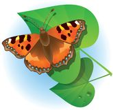 Butterfly and green leaves. Stock Photos