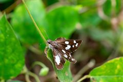 Butterfly on Green leaves.Butterfly with green trees stock images
