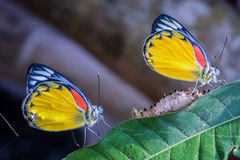 Butterfly On Green Leaves Royalty Free Stock Photography