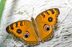 Butterfly in green nature Royalty Free Stock Image