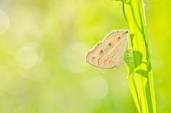 Butterfly in green nature Stock Photography