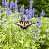 Butterfly in the green nature Stock Photography