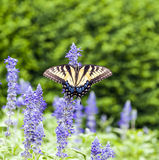 Butterfly in the green nature Royalty Free Stock Photography