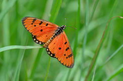 Butterfly in green nature Stock Image