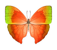 Butterfly green orange Royalty Free Stock Photography