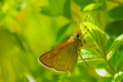 Butterfly on green pant Stock Photo