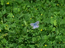 Butterfly on green plant Royalty Free Stock Photo