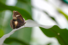 Butterfly on a green plant Royalty Free Stock Photo