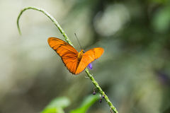 Butterfly on green stalk Royalty Free Stock Photo