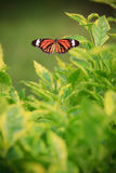 Butterfly on green tree Stock Photos