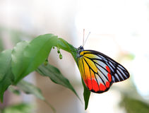 Butterfly on green tree in home garden Royalty Free Stock Photos