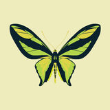 Butterfly green wing abstract on yellow color background Royalty Free Stock Images