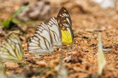 Butterfly on the ground stock photos
