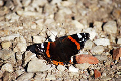 Butterfly on the ground. Orange and black butterfly on the ground Royalty Free Stock Image