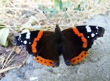 Butterfly on the ground. Butterfly. royalty free stock photos
