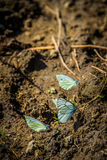 Butterfly. Ground background soil closeup group colorful beautiful nature beauty summer white natural animal garden wildlife wing insect macro blurry tropical Royalty Free Stock Photo