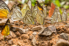 Butterfly on the ground stock images