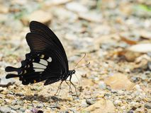 Butterfly on the ground Blurred view of natural background. Beautiful color Butterfly on the ground Blurred view of natural background stock photo